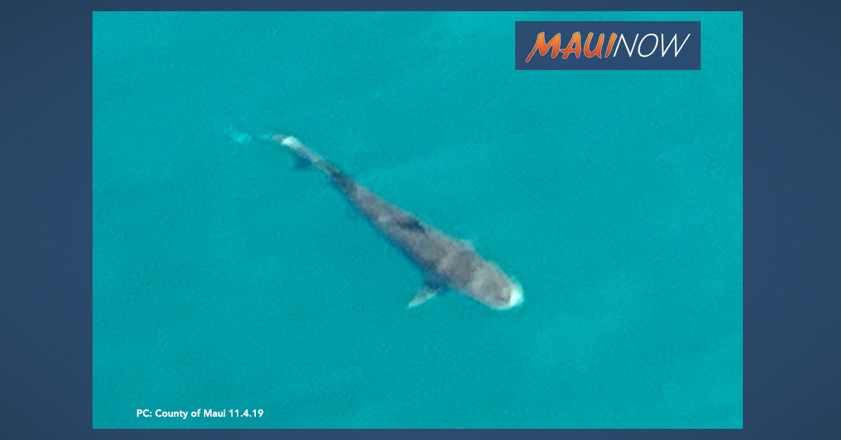 Sharks Spotted Again off South Maui, Beaches Remain Closed