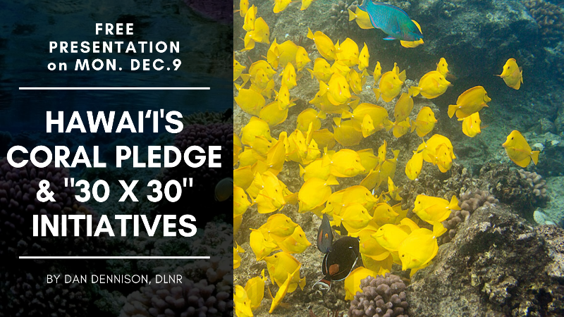 The Coral Pledge Initiative Seeks to Reduce Human Impacts