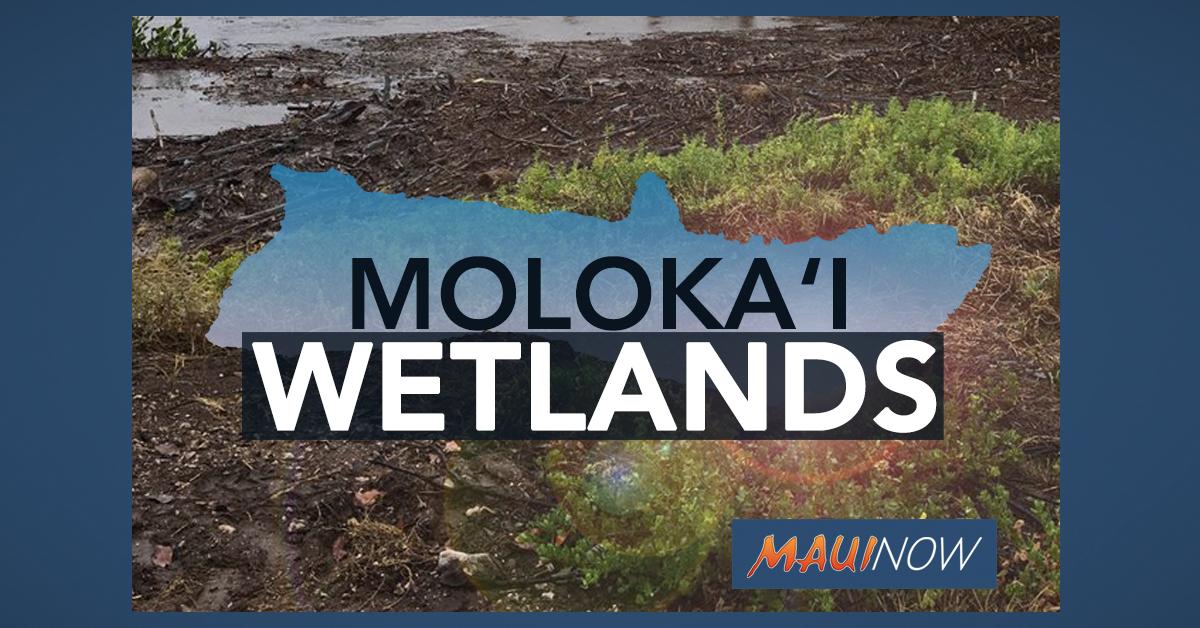 EPA Enforcement to Result in Restored Moloka'i Wetlands