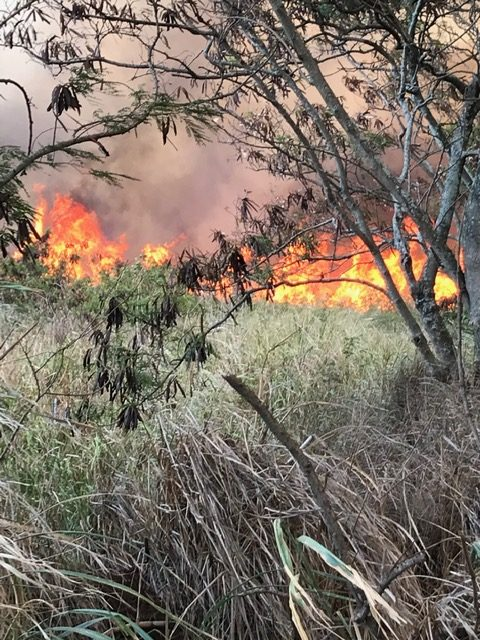 Pāʻia Brush Fire Scorches 600 Acres