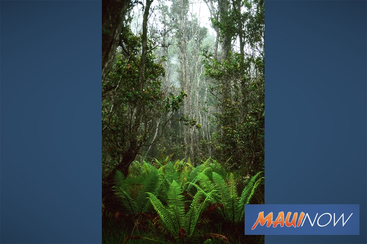 $45K Donation Supports Recovery of Hawaiʻi Island Forests