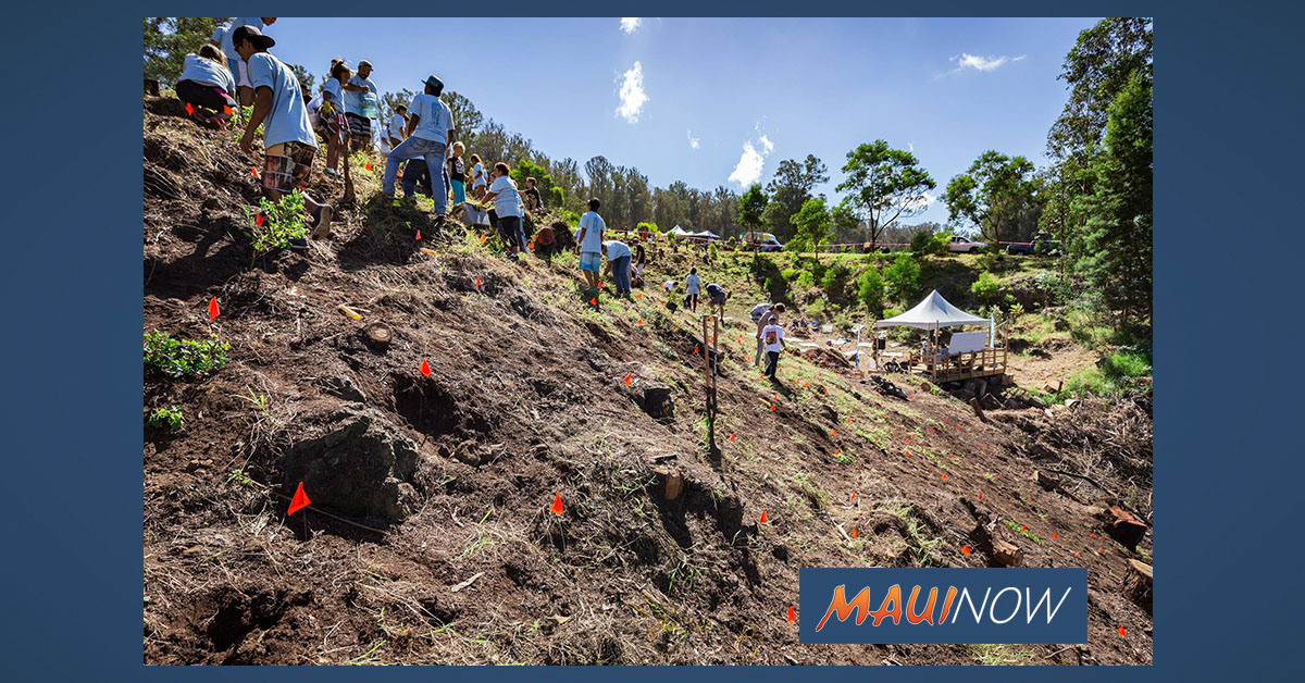 Native Habitat Project Calls for Tree Planting Volunteers This Saturday in Kula