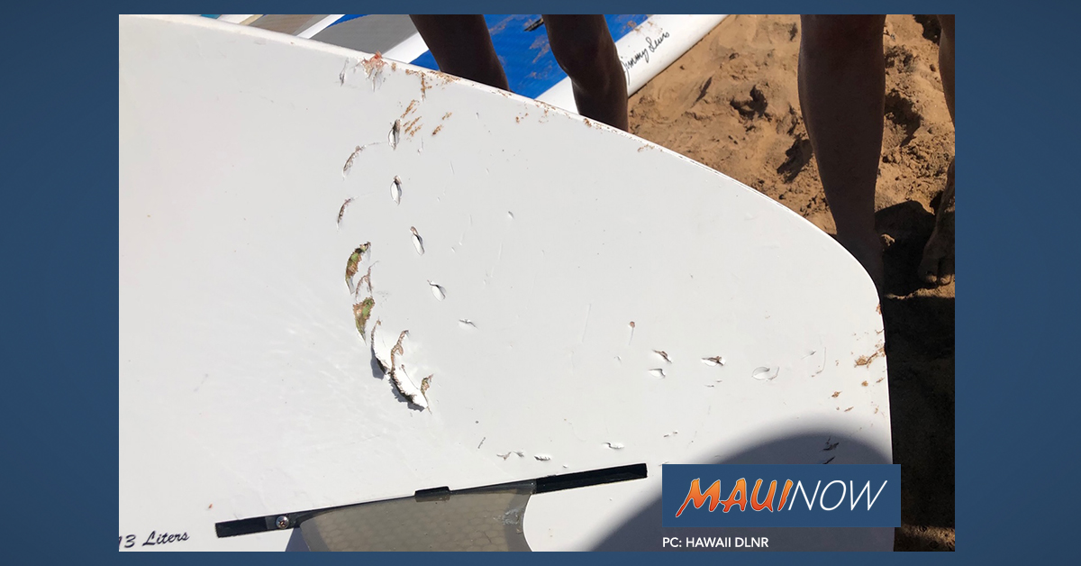Shark Bites Paddle Board, Aggressively Pursues SUP Group in South Maui Waters