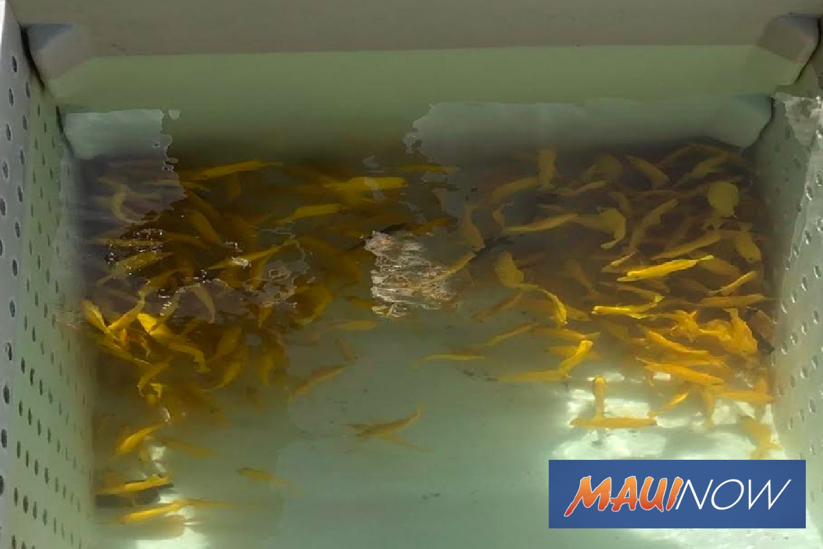 Two Men Cited For Illegal Aquarium Gear, Fish