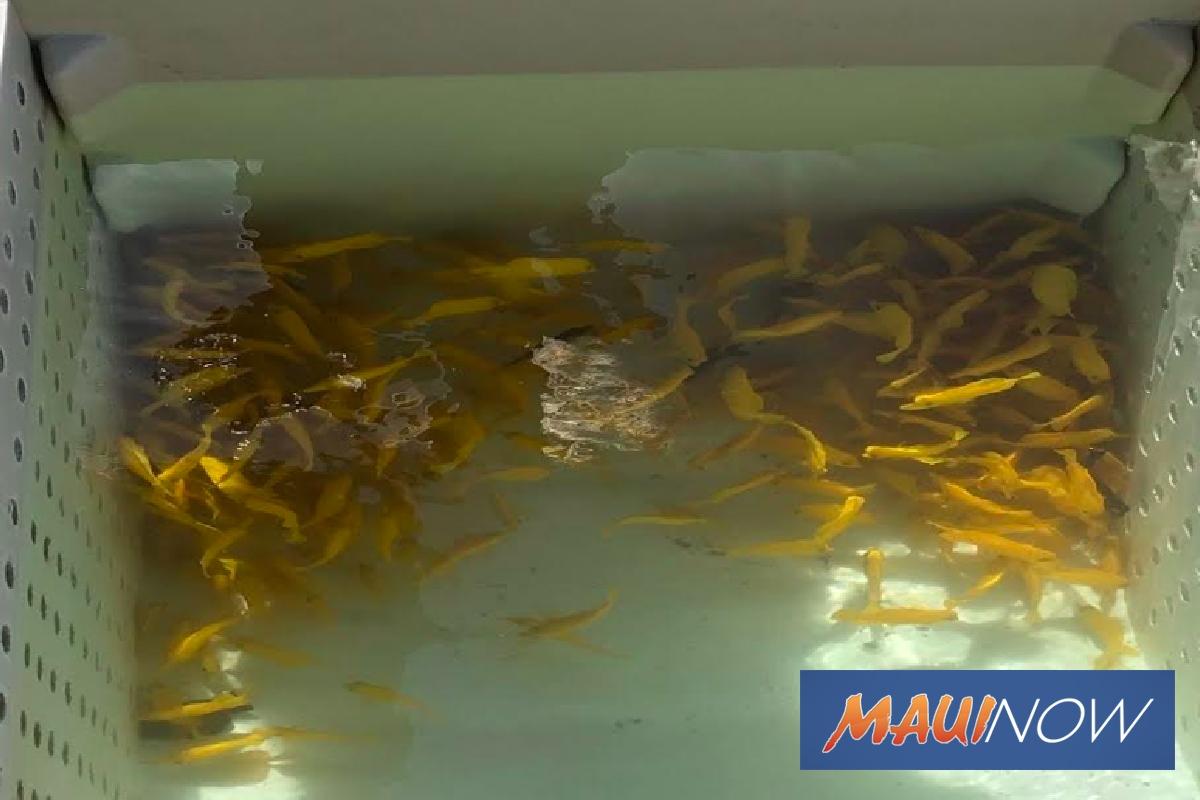 Two Men Cited For Illegal Aquarium Gear, Fish