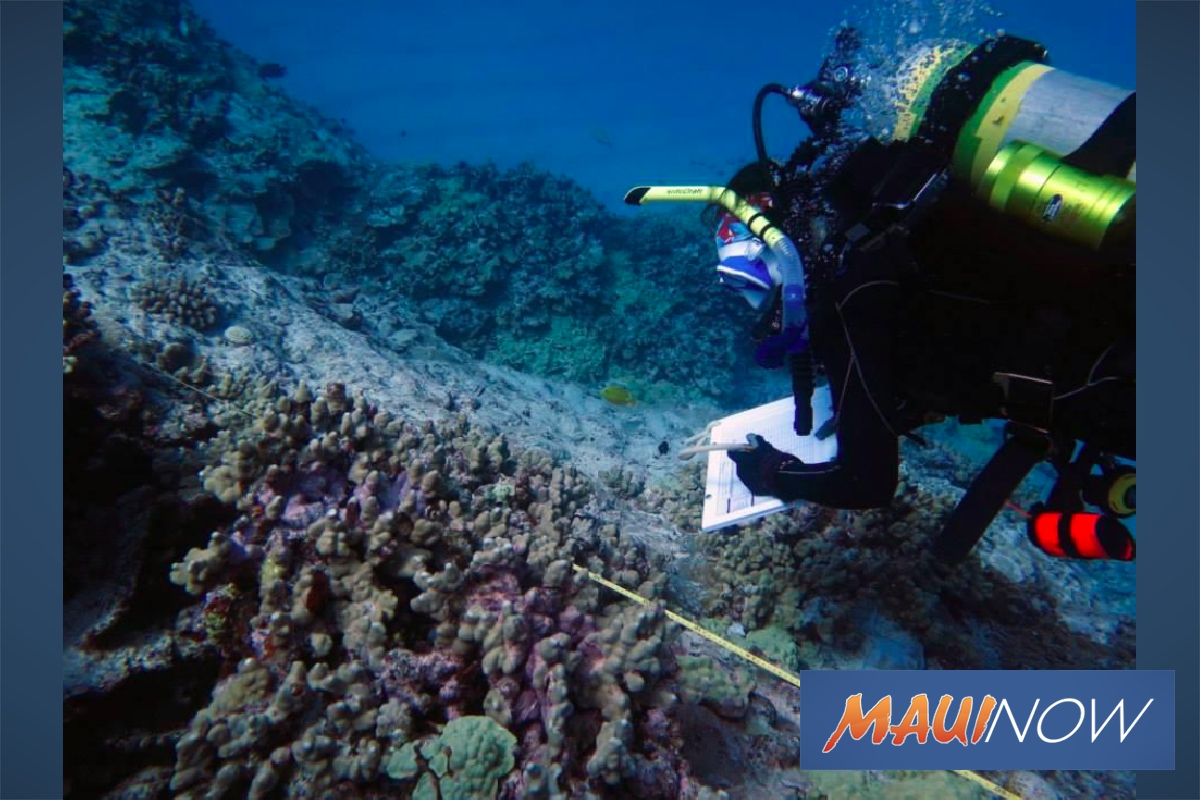 UH Researchers Decode Coral Diseases
