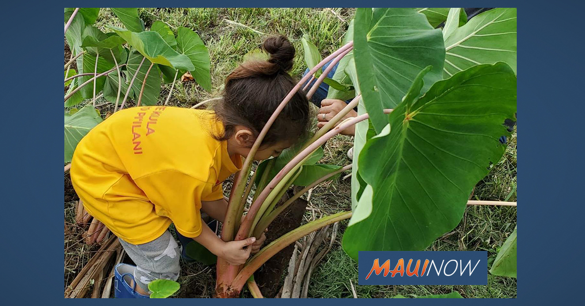 Ke Kula 'O Pi'ilani Hawaiian Immersion School Hosts Open House, Feb. 7