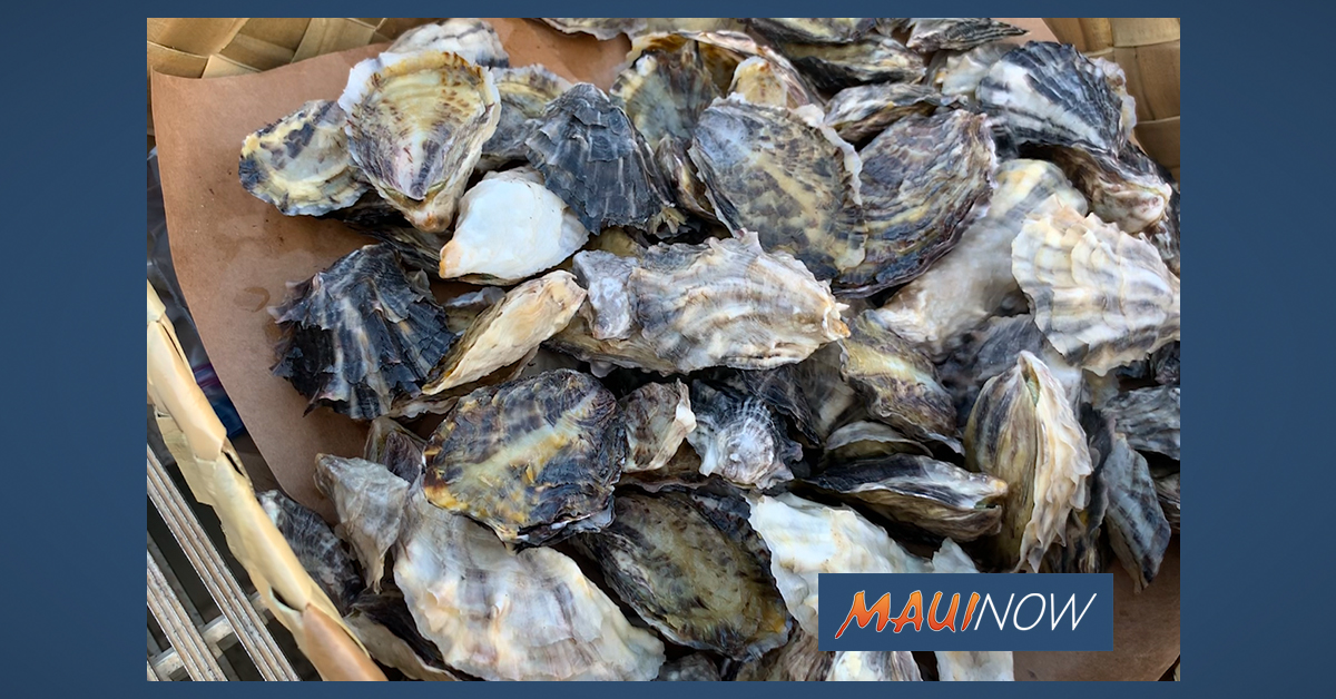 Oyster Pilot Project Launched on Maui to Improve Water Quality