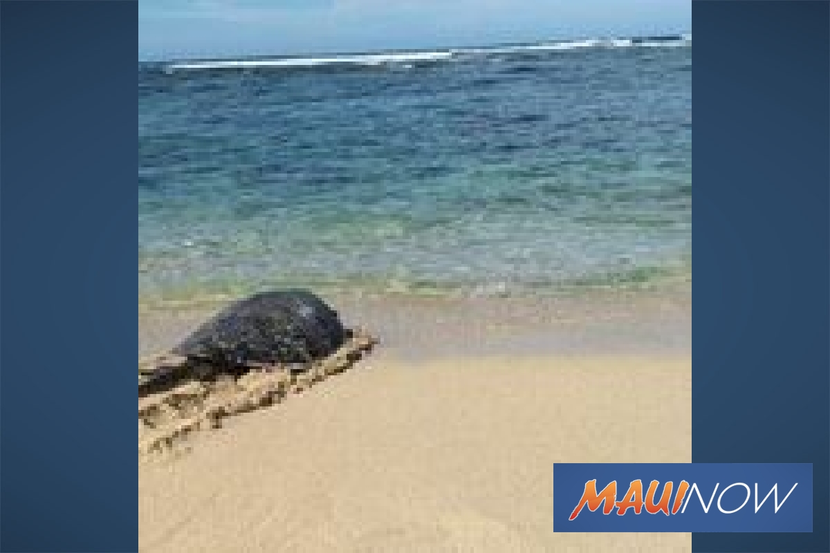 Rescued Turtle Returns Home