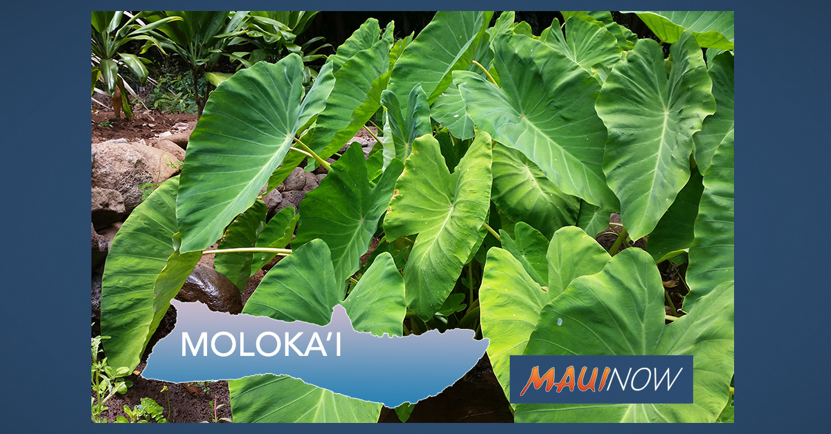 Applications Available for Moloka'i Farming Cost-Reimbursement Program
