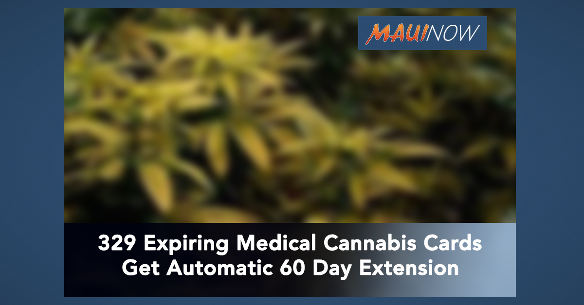 329 Medical Cannabis Cards Expiring in March or April Get Automatic 60 Day Extension