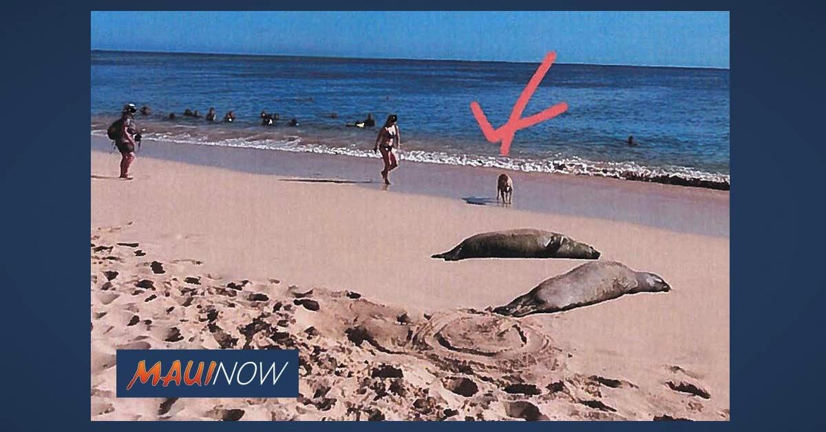Three Incidents in Three Days Prompts Reminder Not to Disturb Hawaiian Monk Seals