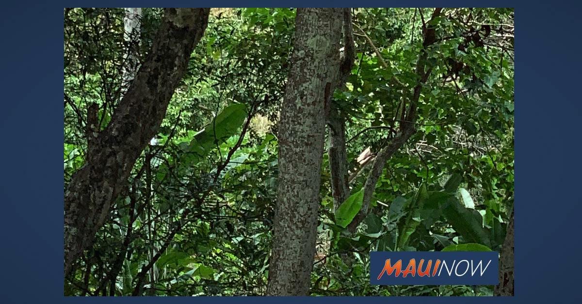 Central Maui Landfill Greenwaste Disposal Canceled on Sundays