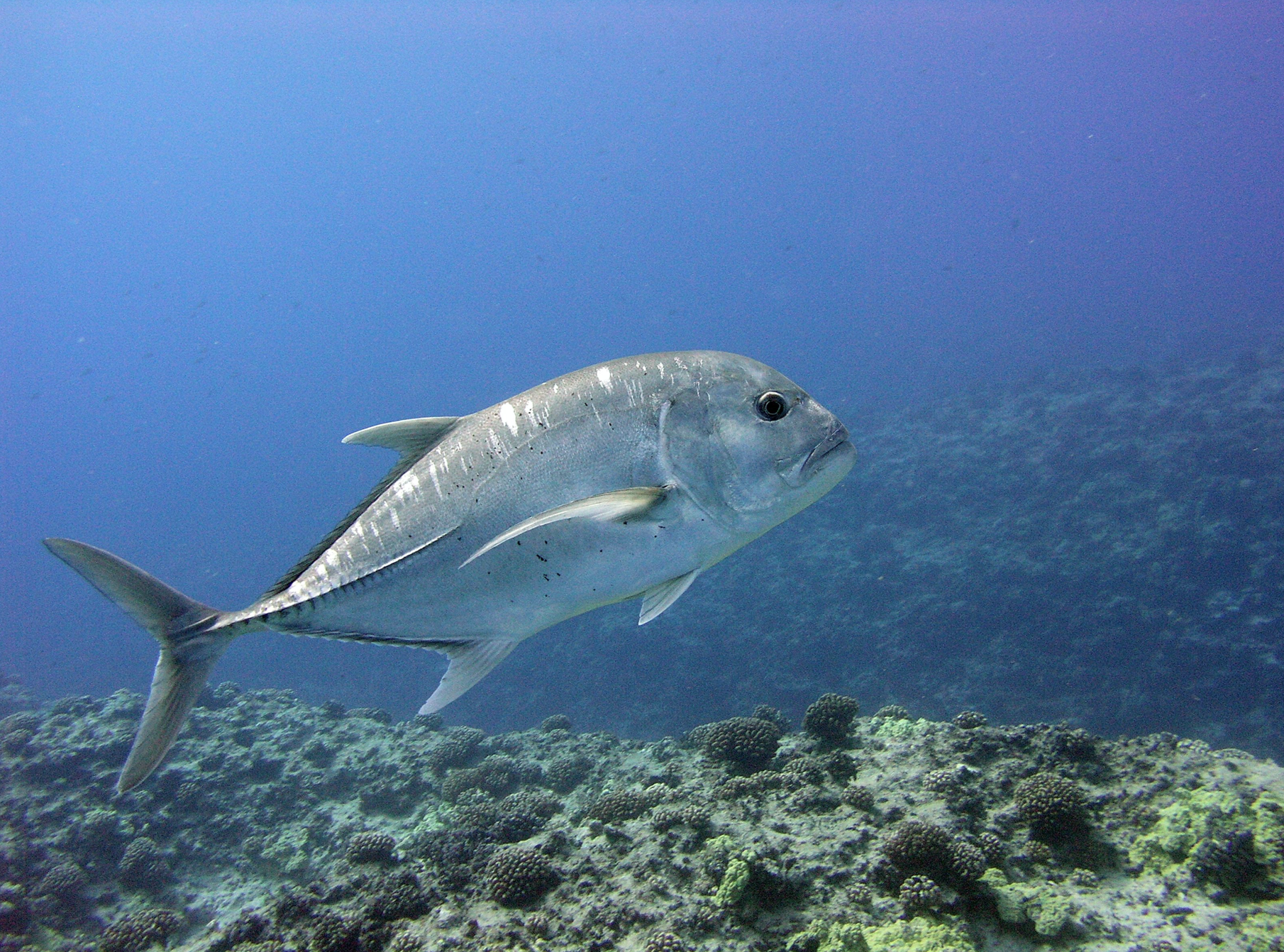 Study Finds Return of Fish Populations and Larger Predators at Molokini During COVID-19 Restrictions