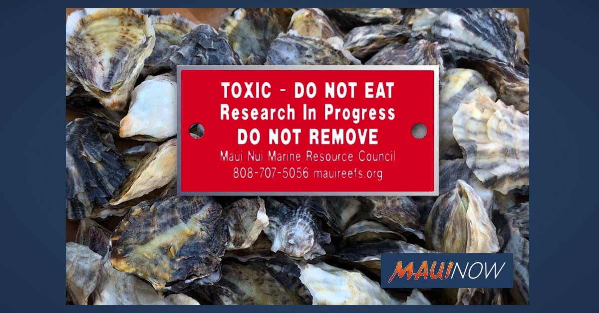 Stolen Oysters on Maui are Unfit for Human Consumption