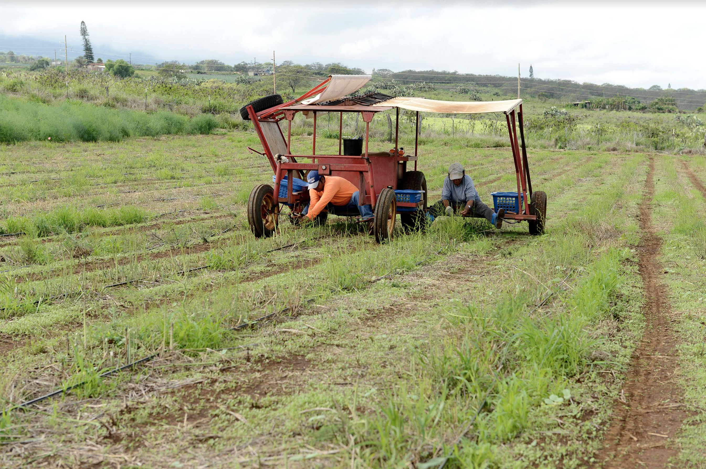 County of Maui announces $2.5 million Agriculture Micro Grant Program