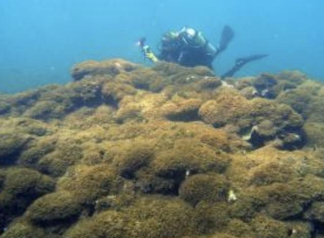 UH Scientists Find ʻAggressiveʻ Algae