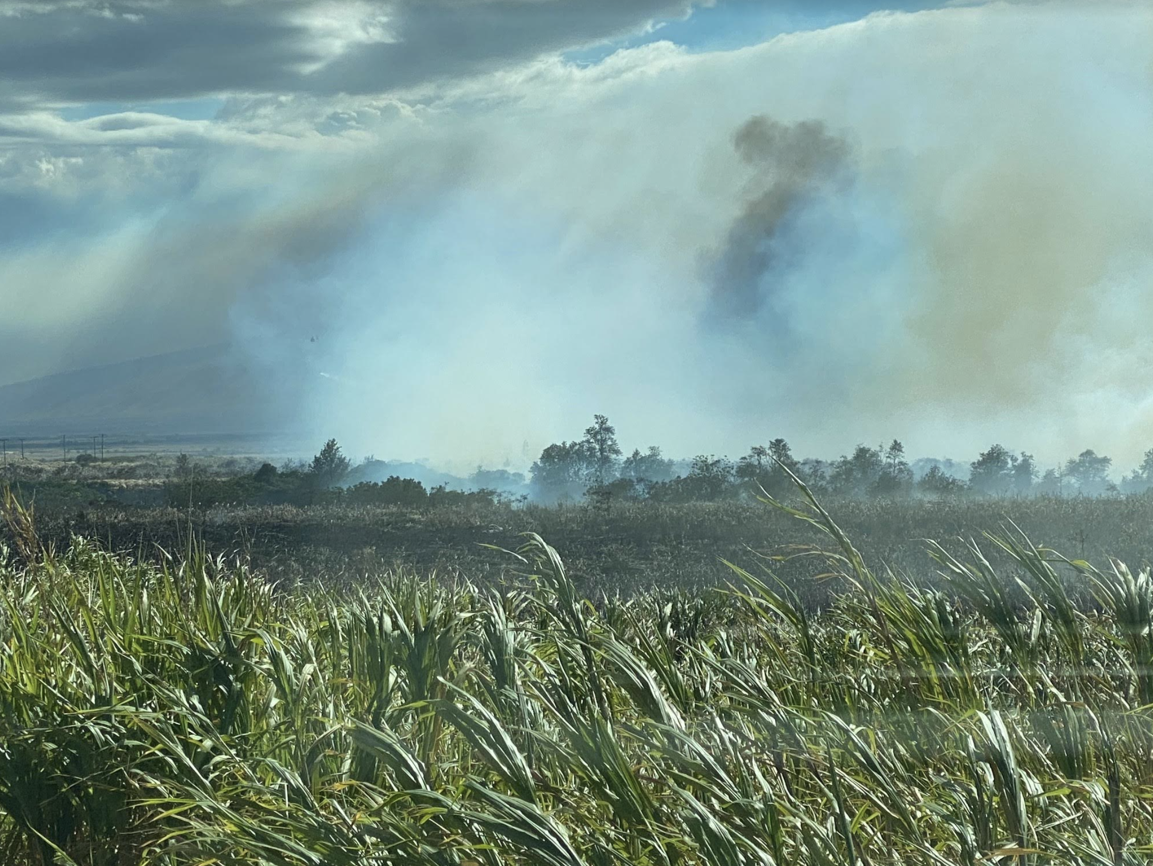 Hāli'imaile Brush Fire 100% Contained