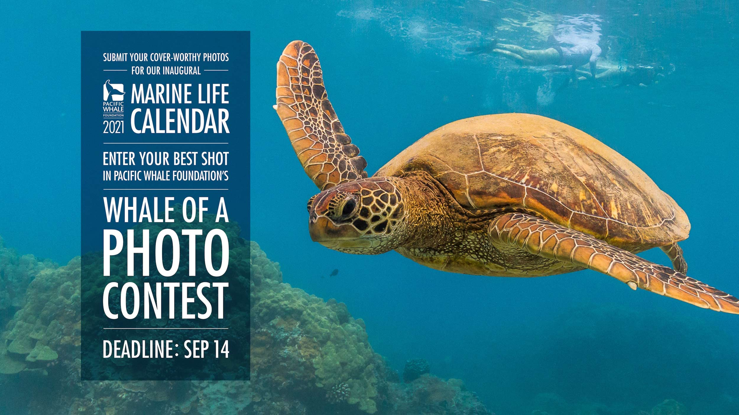 "Pacific Whale Foundation's ""Whale of a Photo"" Contest Seeking Entries"