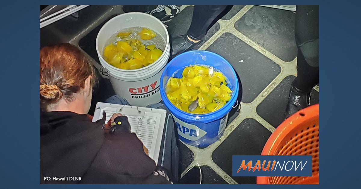 """Bizarre"" Events Lead to Arrest of Aquarium Fish Collector on Hawai'i Island"