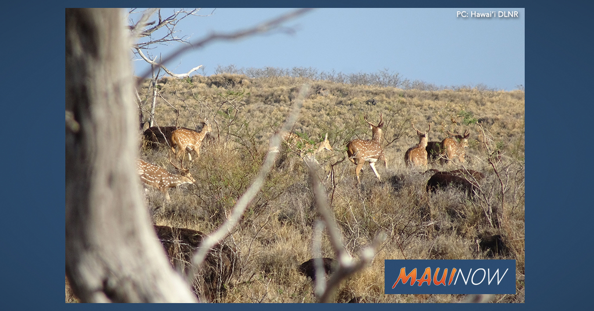 $775,000 to Assist with Axis Deer Management in Maui County