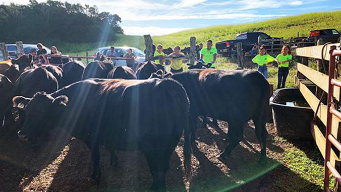 UH Agent Helps Feed Maui Community, and Local Ranchers Stay in Business