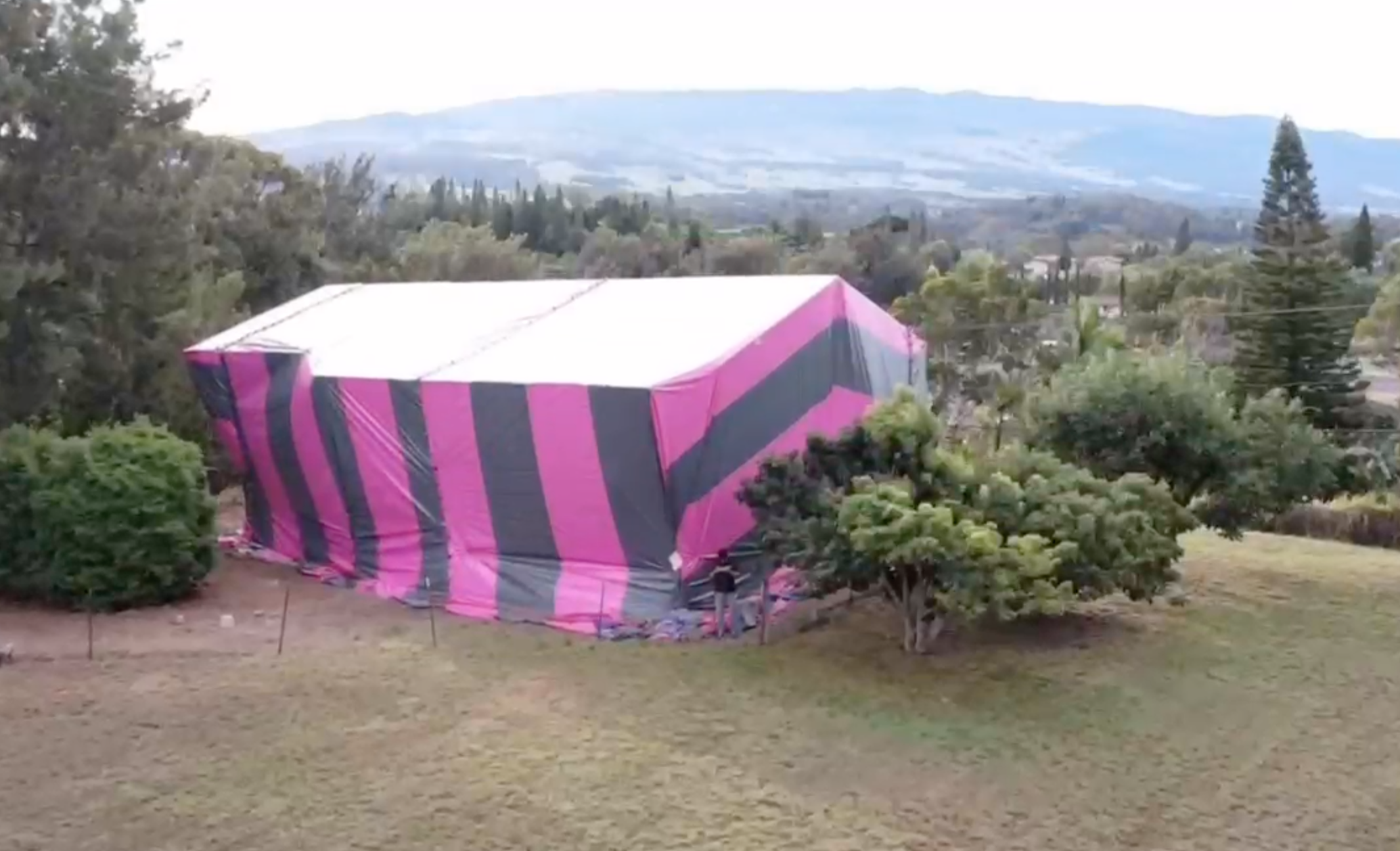 Maui Termite Company Supports Breast Cancer Awareness with Pink Fumigation Tents