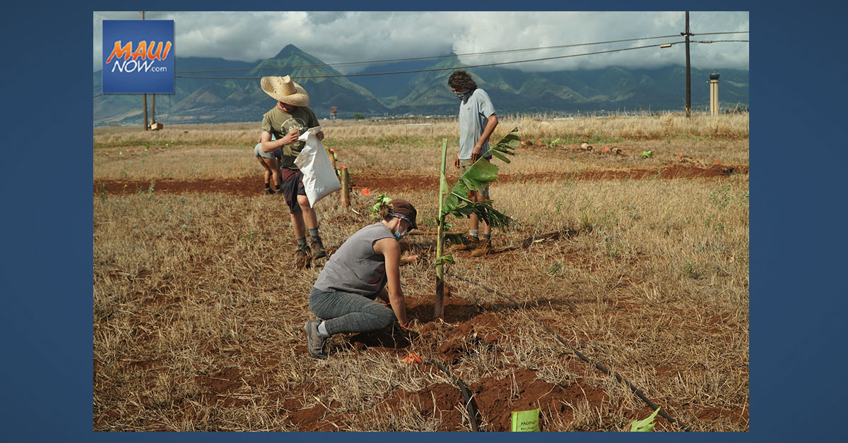 Mahi Pono Plants 300 Native Trees for Statewide Tree Planting Day