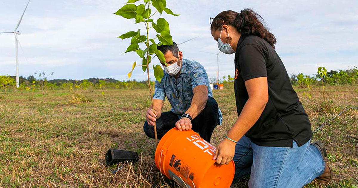 Alaska Airlines to Plant a Tree for Every Flight to Hawaiian Islands Until End of Year