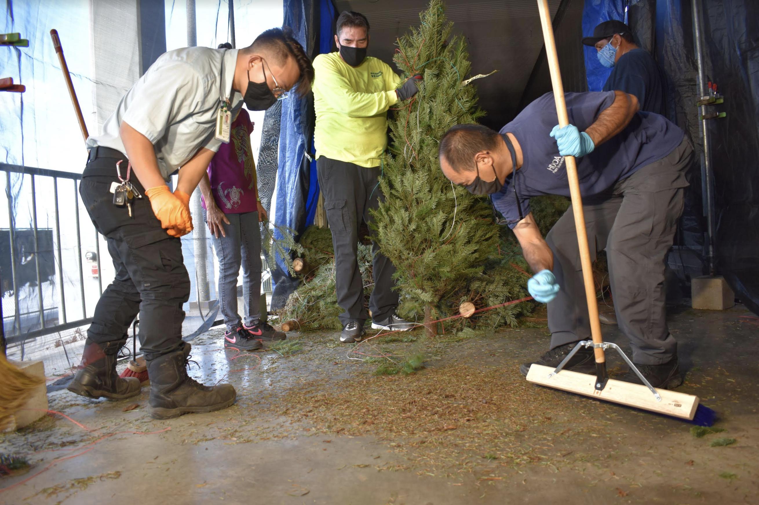 Garter Snake Found in Christmas Tree Shipment