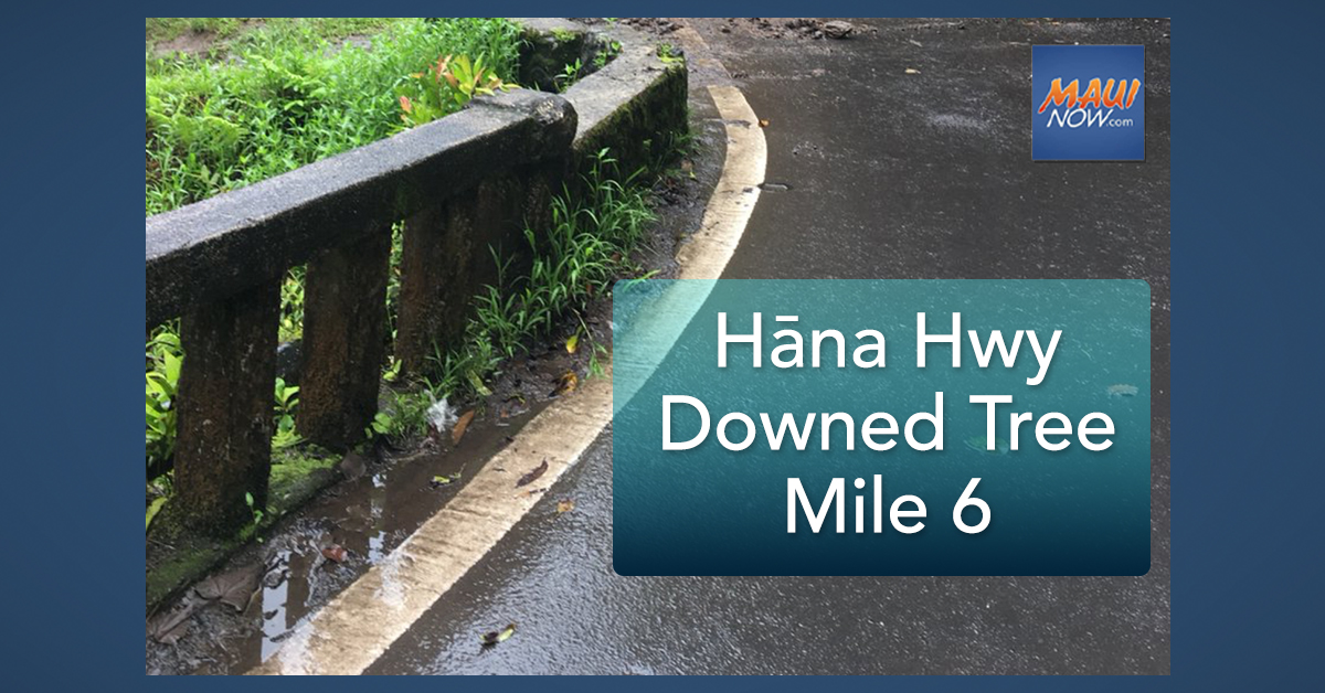 UPDATE/CLEARED: Hāna Highway Downed Tree at Mile 6