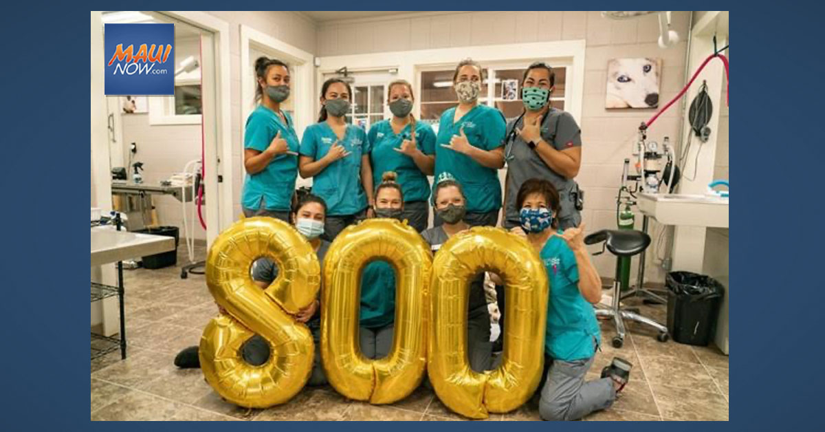 Maui Humane Society Celebrates Record Breaking 800 Spay/Neuter Surgeries in Wake of Pandemic Disruption