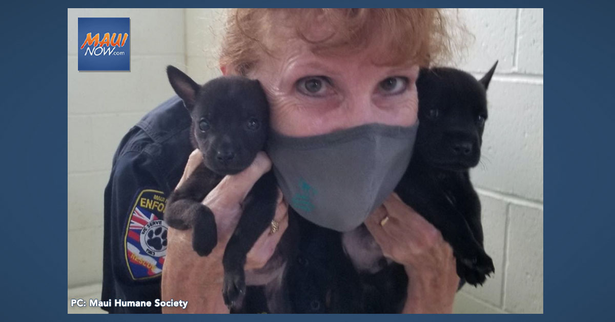 Puppies Found in Sealed Container Left Outside Maui Shelter