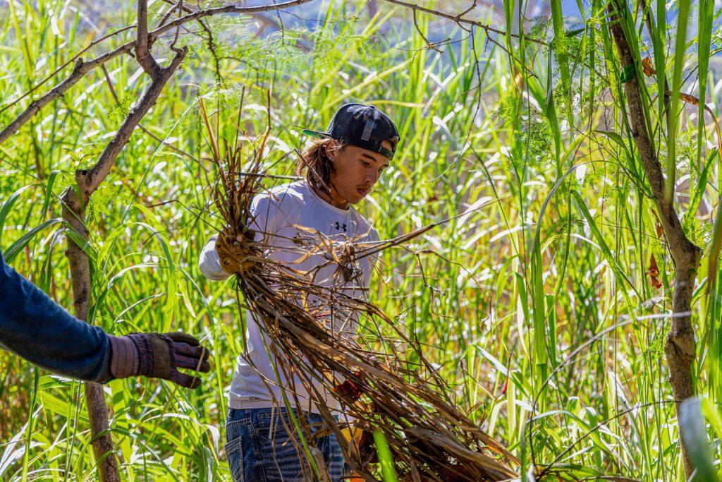 Waiheʻe Coast Dunes and Wetlands Refuge
