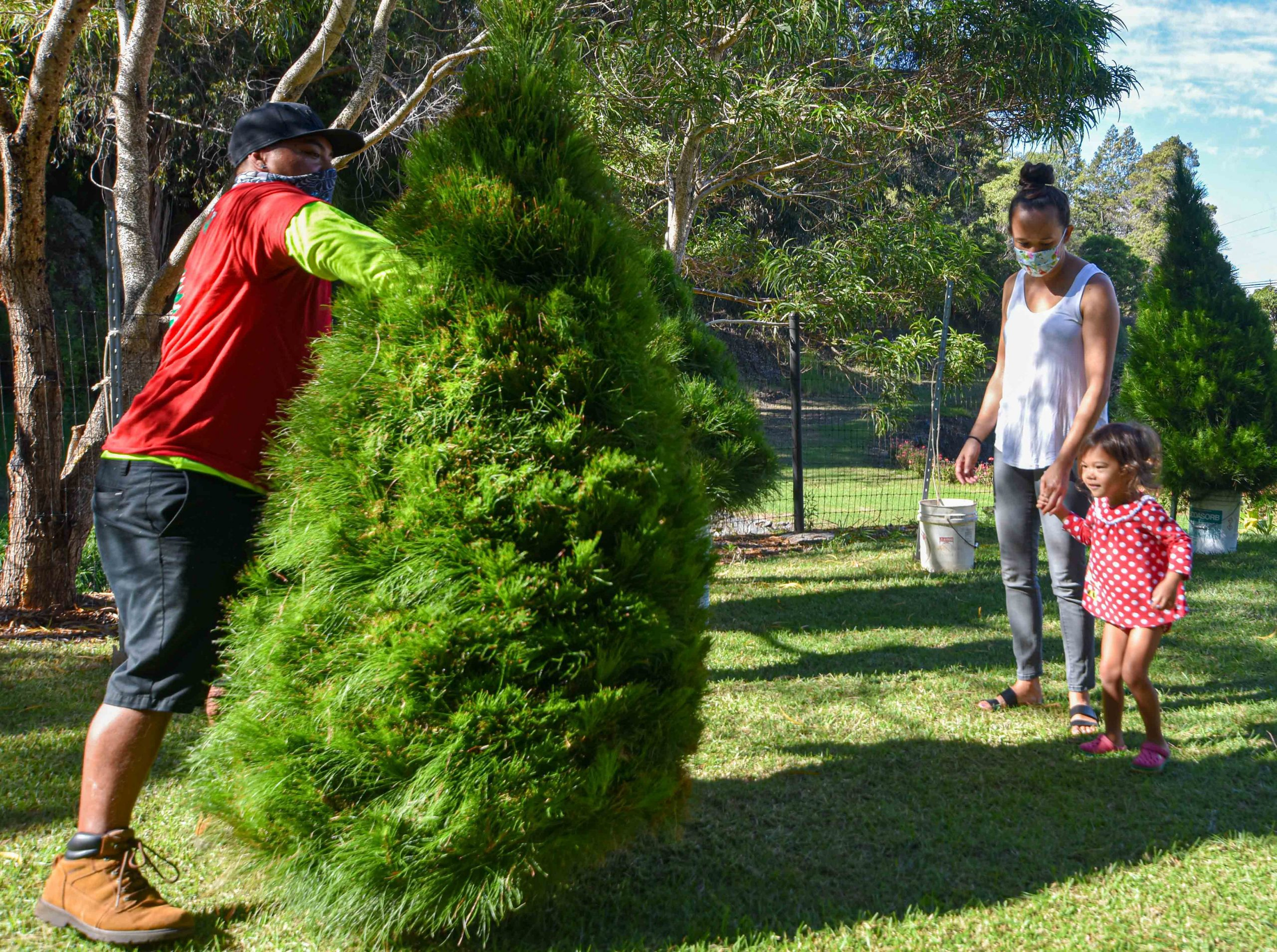Christmas Tree Sales Help 50-Year-Old Kula Botanical Garden Stay In Business