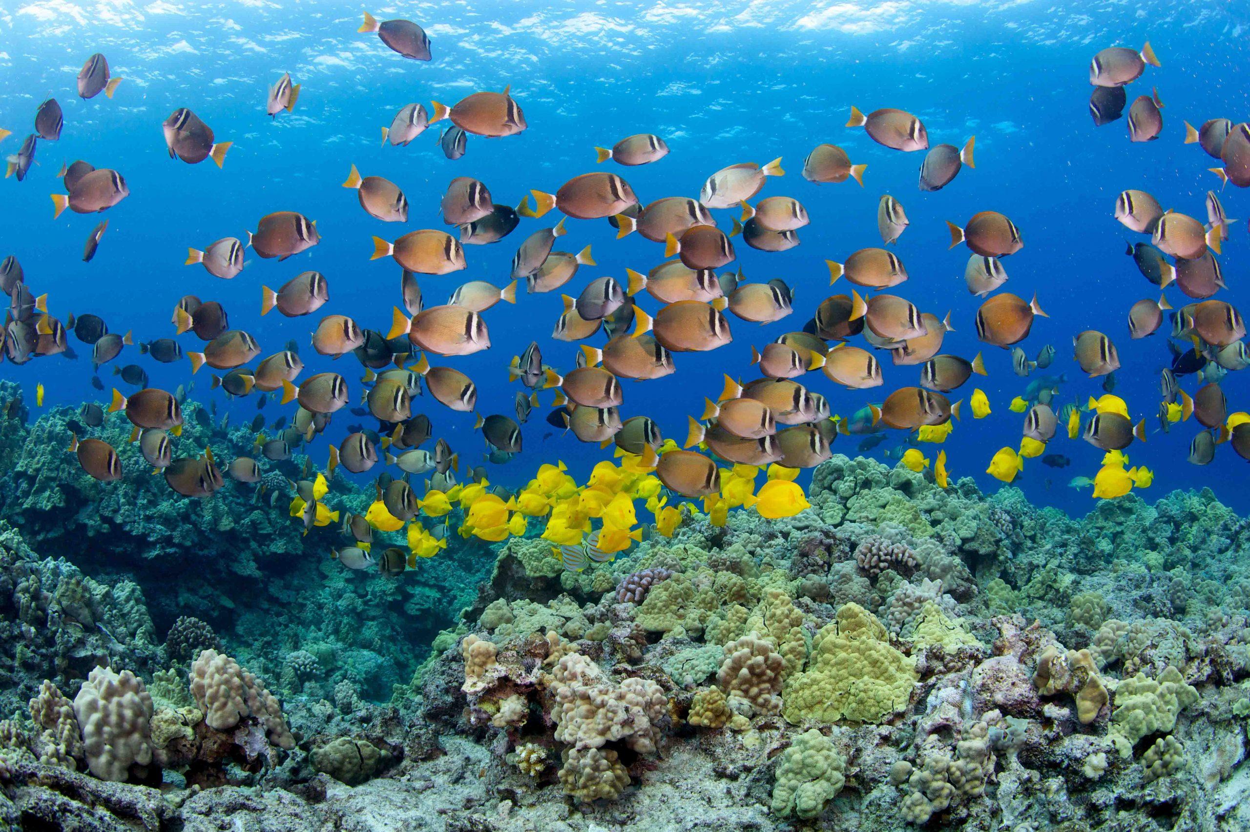 Hawaiian Electric Awards Grants to Environmental Nonprofits