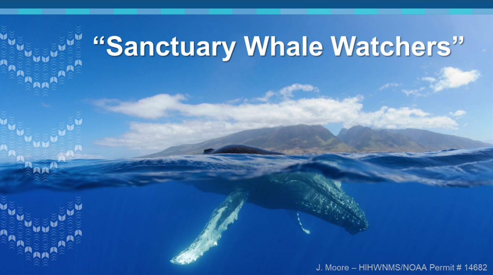 Sanctuary Running Modified Humpback Whale Count but Public Can Still Help