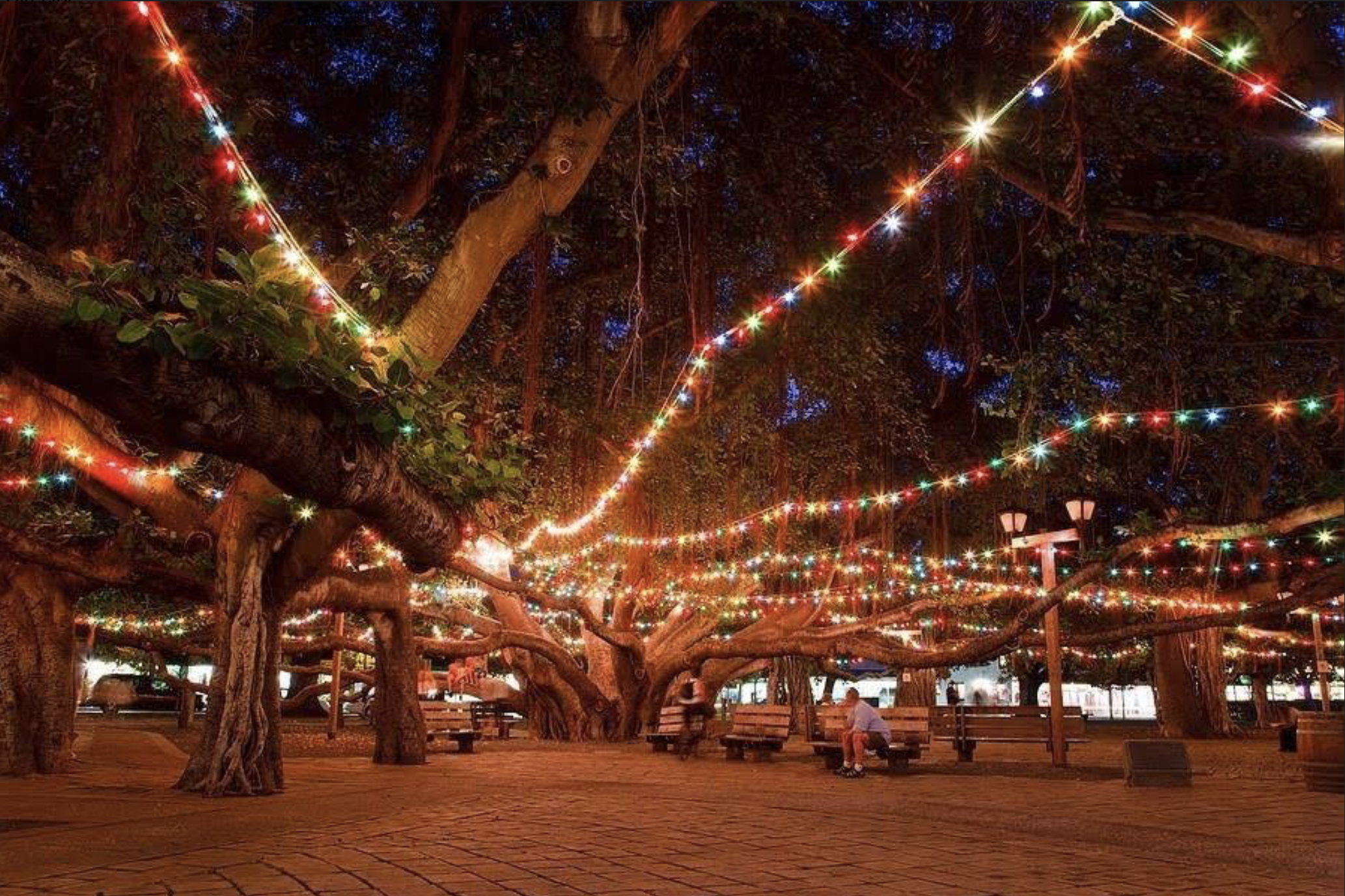 147 Year Old Banyan Tree in Lahaina is Lit for the Holidays