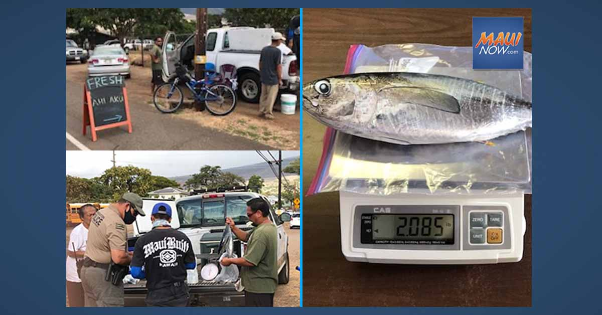 Kahului Man Cited for Selling Undersized Ahi