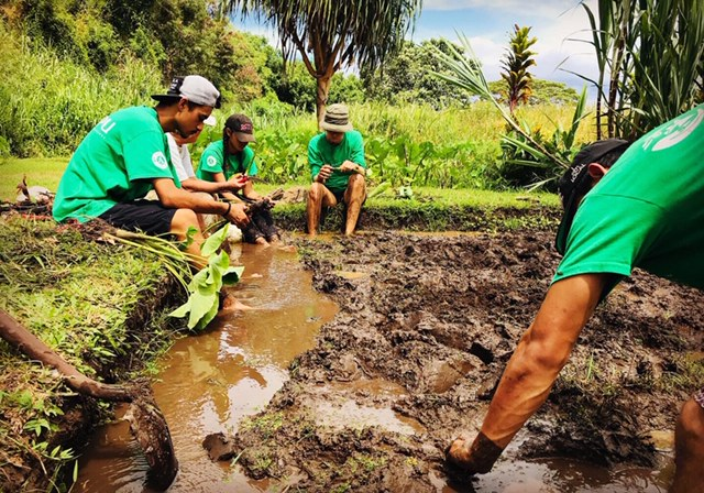 Kupu Now Accepting Applications for Hawai'i Youth Conservation Corps Summer Program