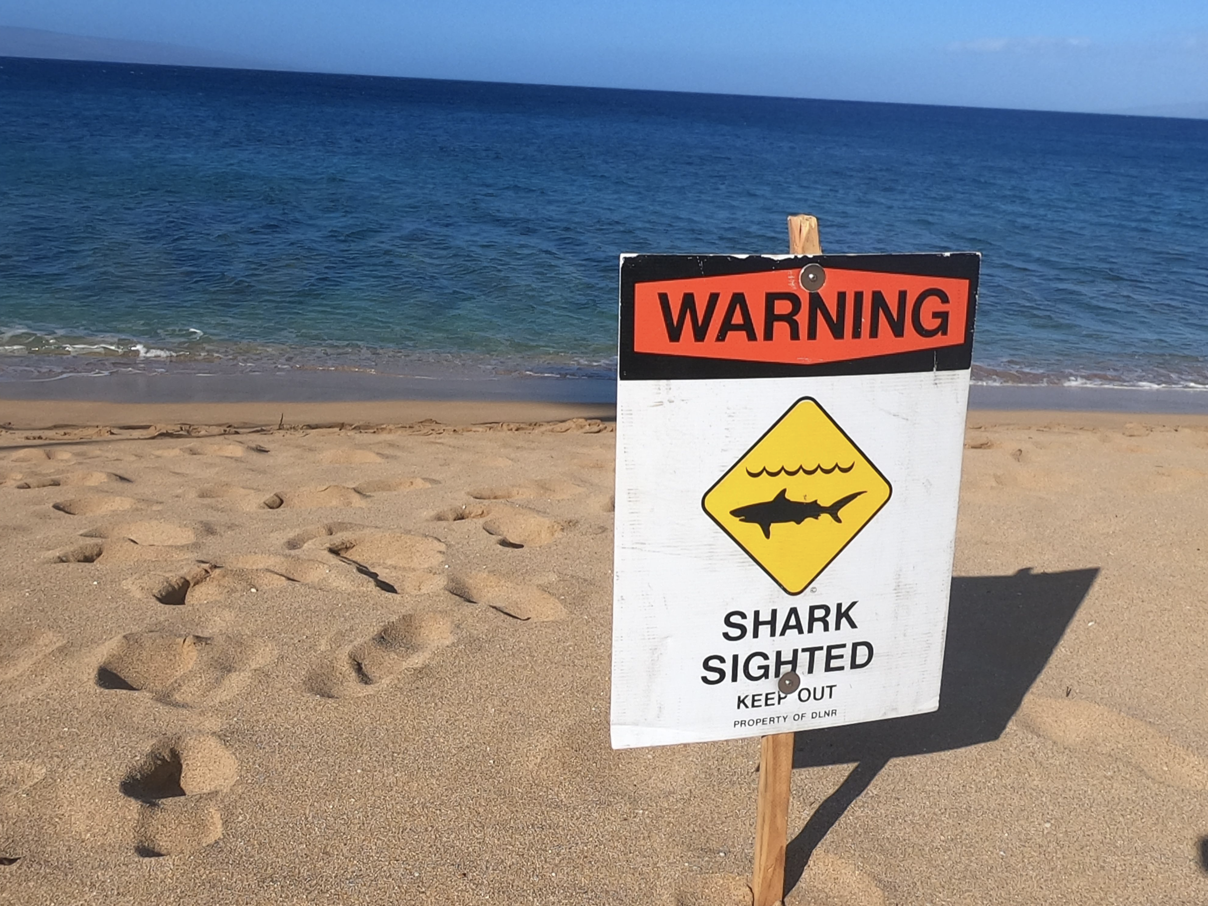 Father and Son Safe as Shark Reportedly Sinks Kayak on Maui