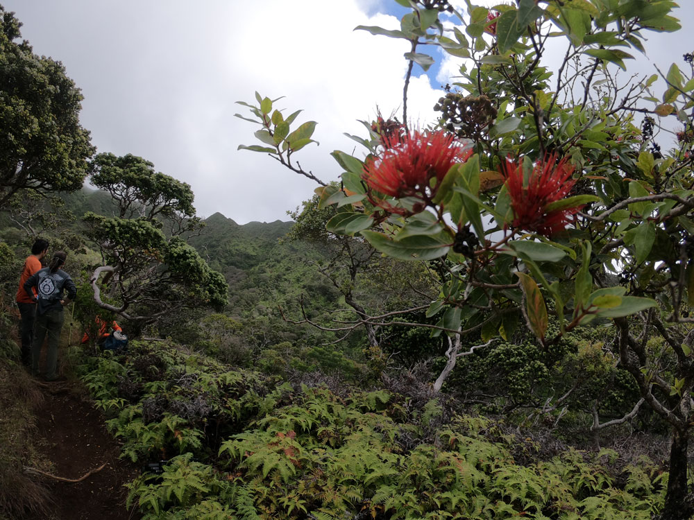 300 Acres of South O'ahu Rainforest Donated for Conservation