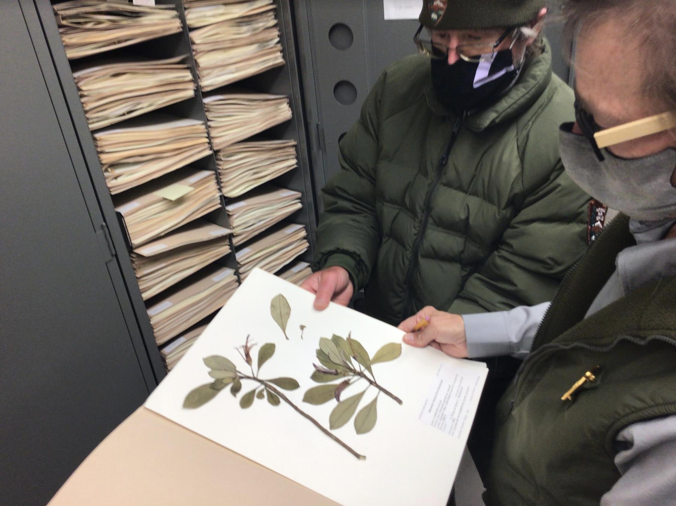 Archiving a Legacy of Plants at Haleakalā National Park