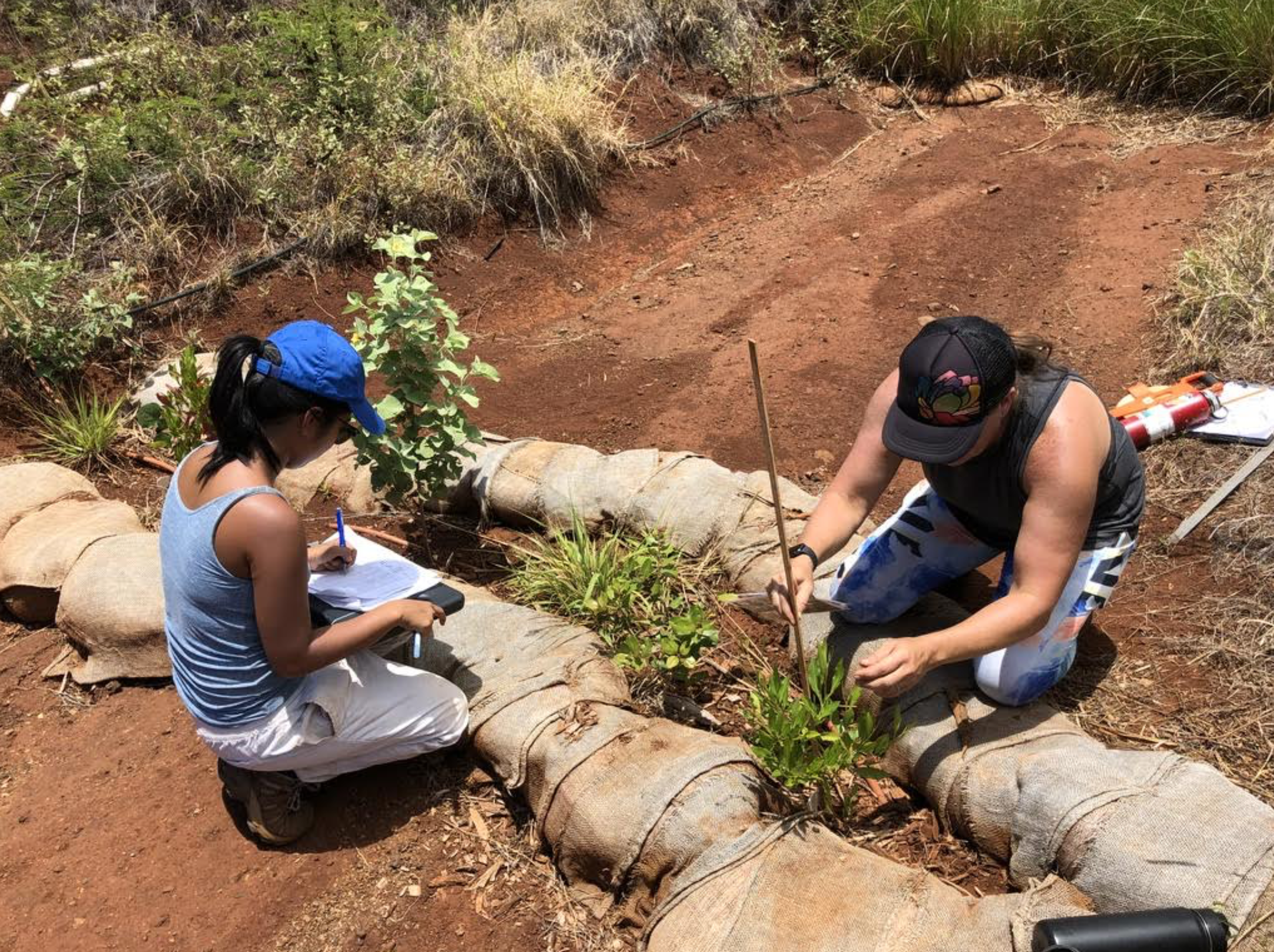 Maui Volunteers Honor World Planting Day, March 21