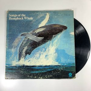 A Whale of a Tale: Roger Payne's Album of Humpback Songs Still Resonates 50 Years Later