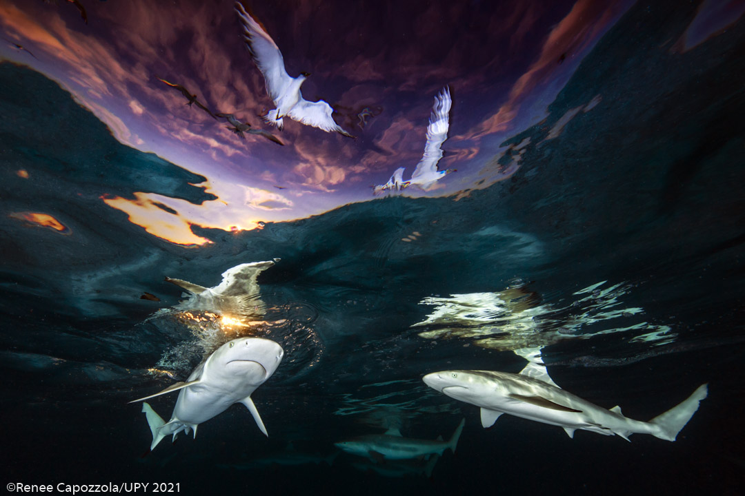 Maui Resident Wins Underwater Photographer of the Year in Contest with 4,500 Images from 68 Countries