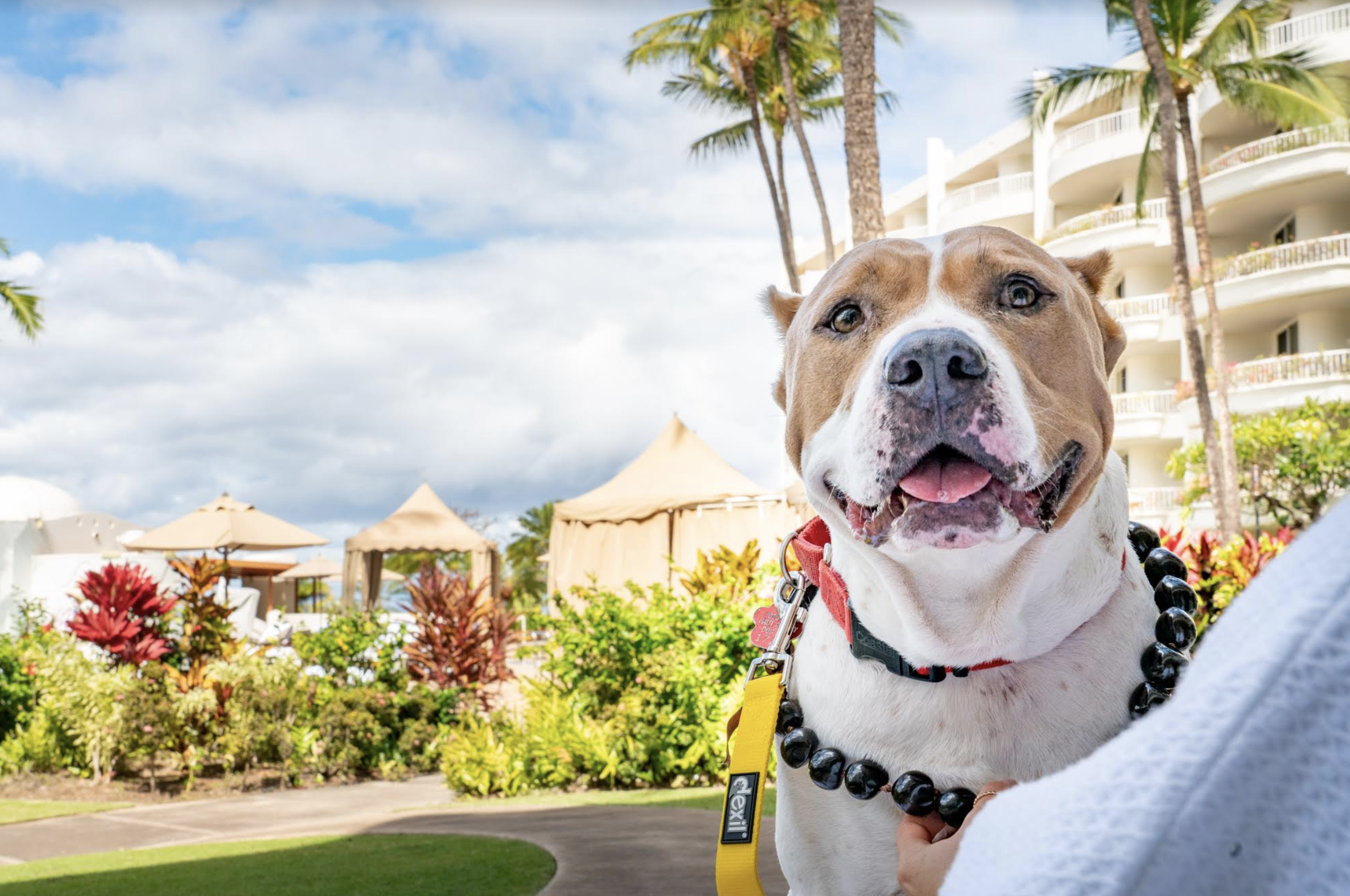 Wags to Riches: Maui Shelter Dogs Spend the Night at Luxury Resorts