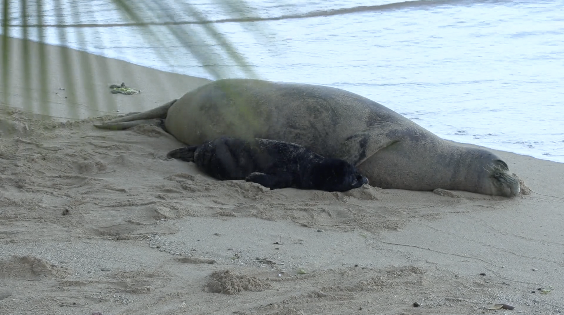 Witness to Aftermath of Mother Seal Attack Describes Harrowing Injuries to Snorkeler