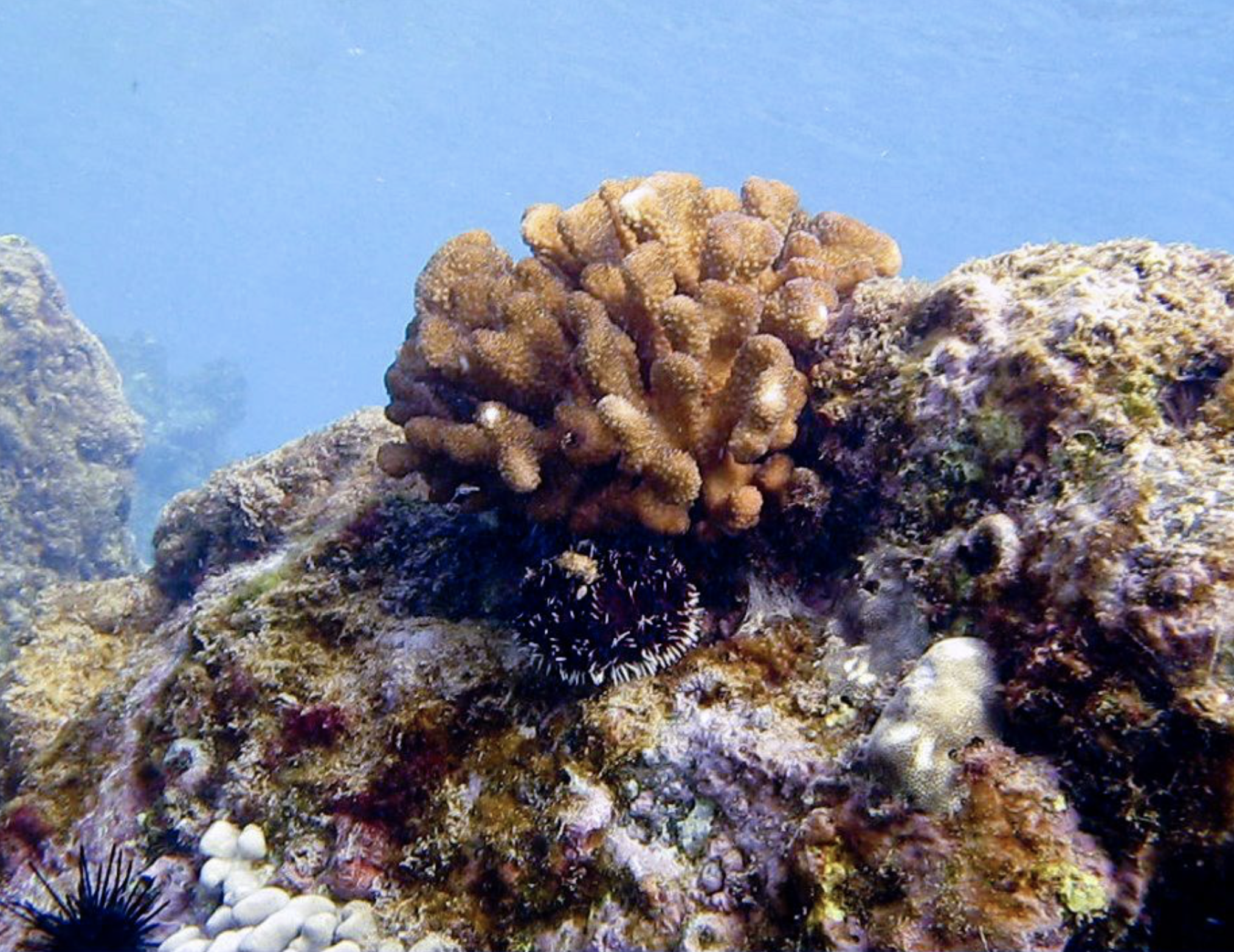 Aquatic Biologists Monitor Coral Spawning During Lunar Cycle and Spring Tides
