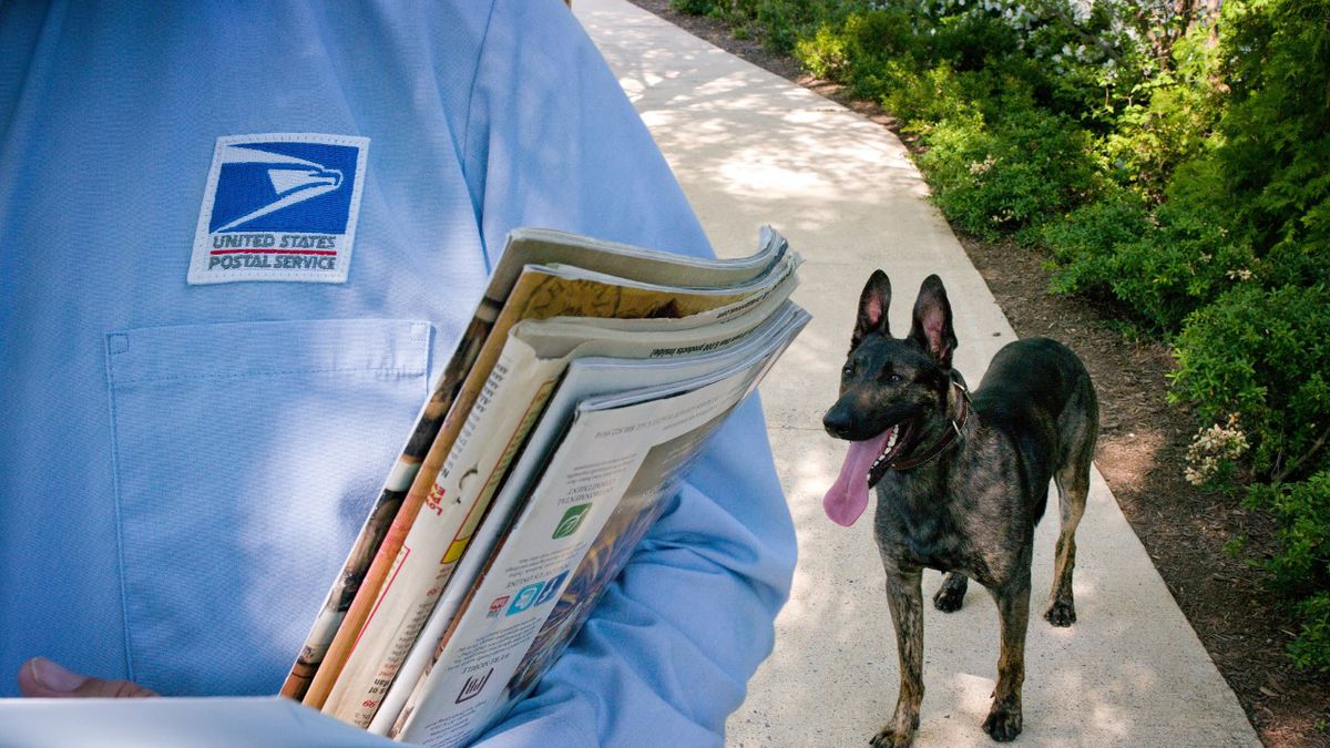 Hawaiʻi Mail Carriers Bit by Dogs 19 Times in 2020, a 58% Increase from 2019